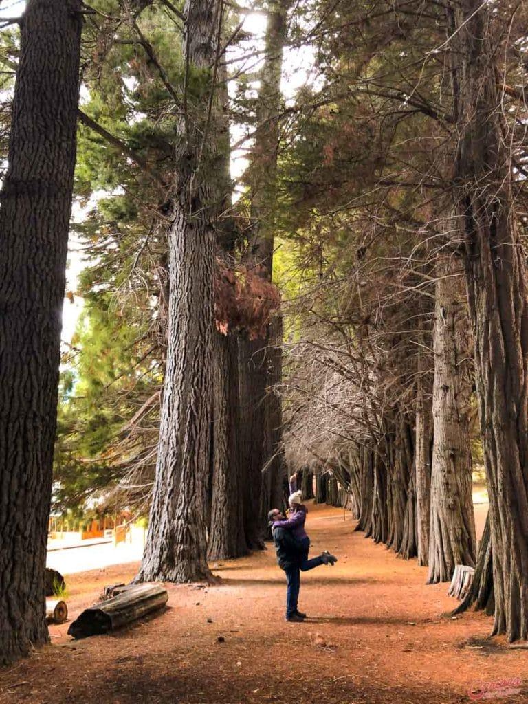 Sequoia na Isla Victoria